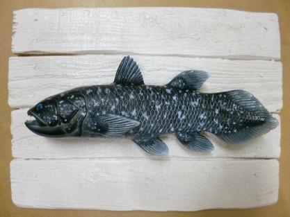 Coelacanthe 19x25cm