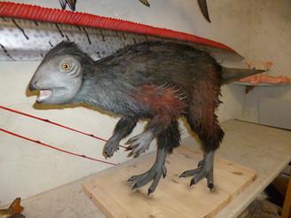 Kulindadromeus 140cm
