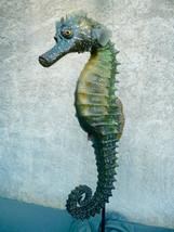 Hippocampe 1m