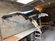Baleine à bosse 2m (1)
