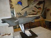 Requin pèlerin 130cm (1)