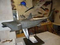 Requin pélerin 140cm