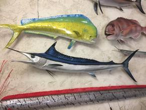 Spearfish 160cm