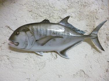 Carangue 50cm