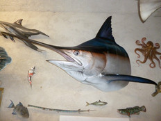 Marlin bleu tête 170cm