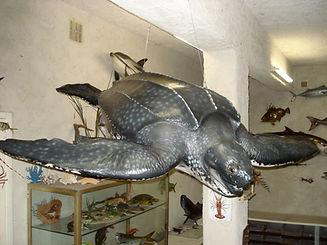 sculpture moulage préparation peinture capvert cap vert décoration poisson résine polyester tortue luth marine