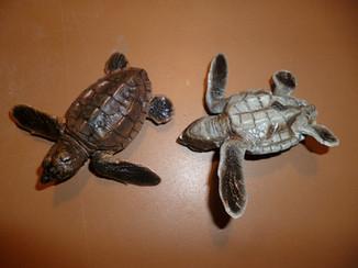 Bébés caouannes 6cm (1)