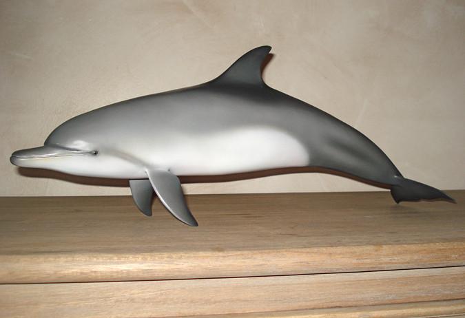 Grand dauphin 50cm