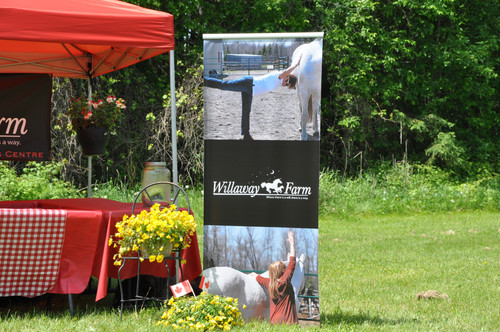 """Willaway Farm celebrates """"the Horse"""" at Welsey Clover Parks - continued ..."""