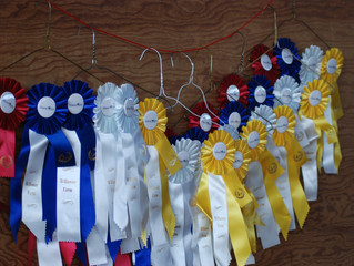 Willaway Farm to Host Olympic Horse Show!