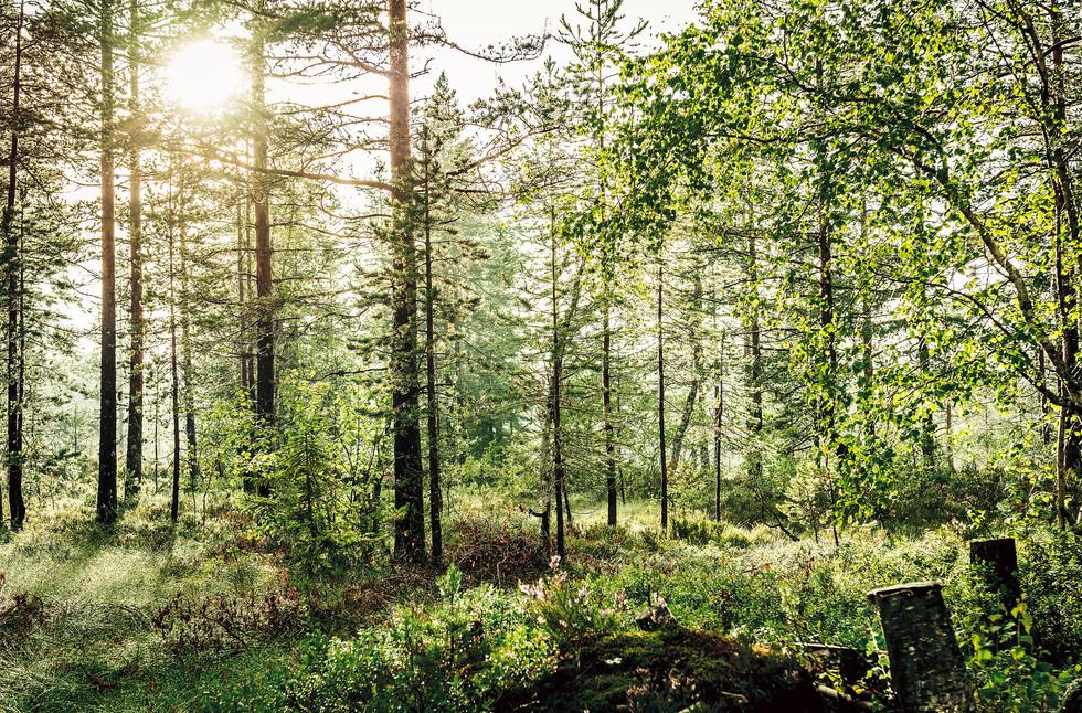 Landschaft_02.jpg