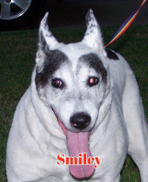 Smiley - AC&C