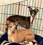 kahlua  back  and samantha front  small breed.png