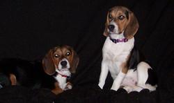 Leila and Lola