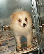 Panda when he first came to us 2005 small breed.bmp