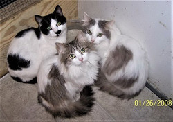 CP CATS TO POST IN CAT ROOM    RESIZED J
