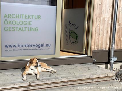 Der Frühling und Hund Koda der Architektin Zillinger