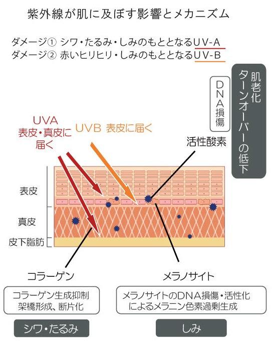 光老化メカニズム.jpg