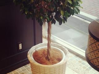 この木、実は…