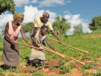 Restructuring Agriculture in Malawi: Let the Hoe Rest in Pieces