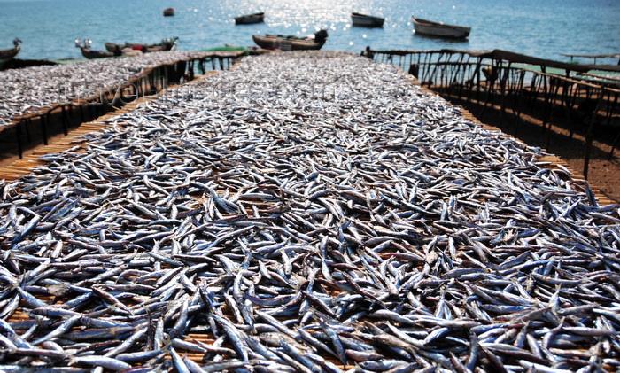 Drying Fish along Lake Malawi