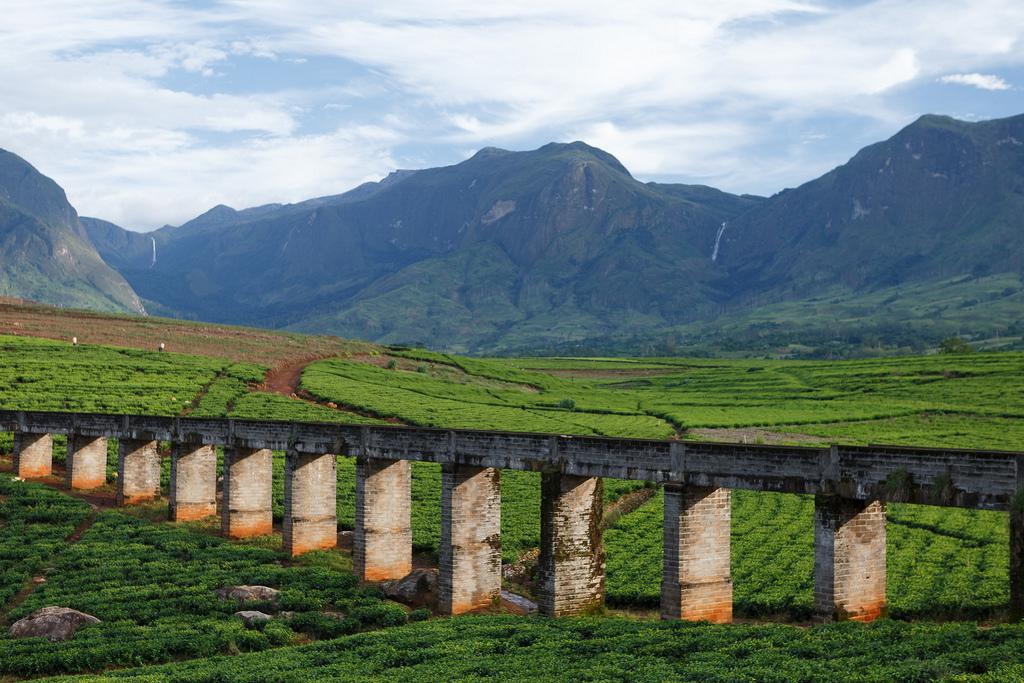 Bridge Across Tea Estate