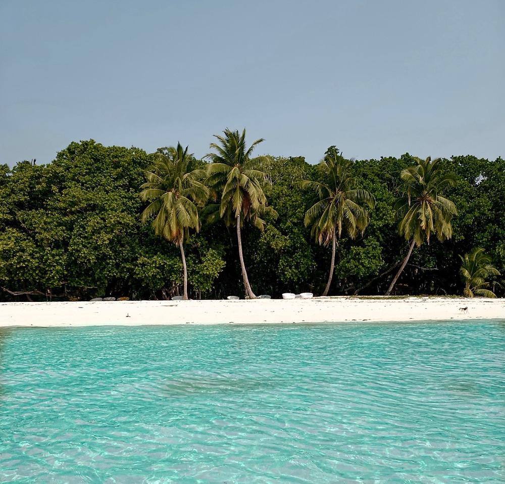 Island- Palm trees- Sea- Beach day- Havelock, Andaman and Nicobar islands, India