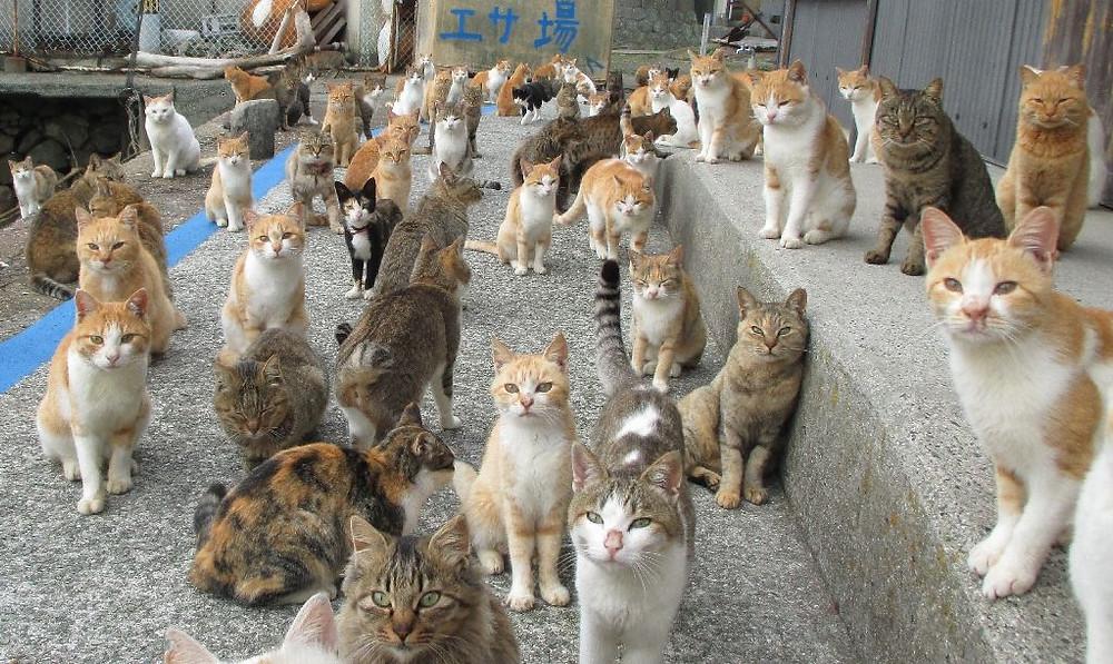Cat island, Japan