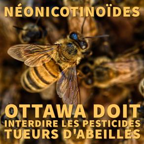 Ottawa doit interdire les pesticides « tueurs d'abeilles »