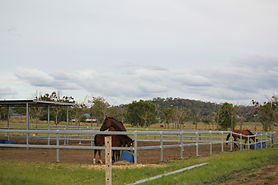 Davidson Equestrian_Agistment.jpg