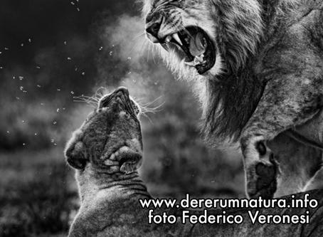 Obiettivo Africa - Testi e foto di Federico Veronesi