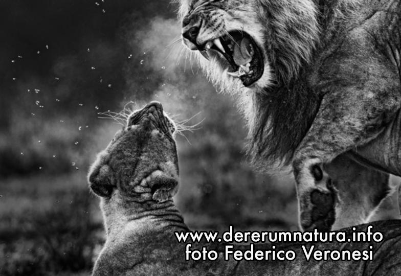 """Immagine tratta dal libro di Federico Veronesi  """"Luce e polvere"""""""