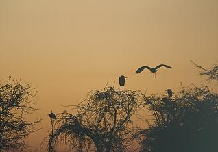 Aironi nel Lago ndi Penne