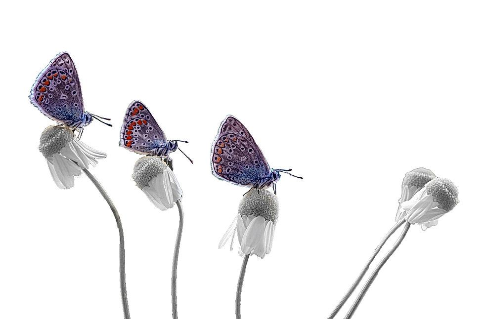 La farfalla, simbolo di biodiversità