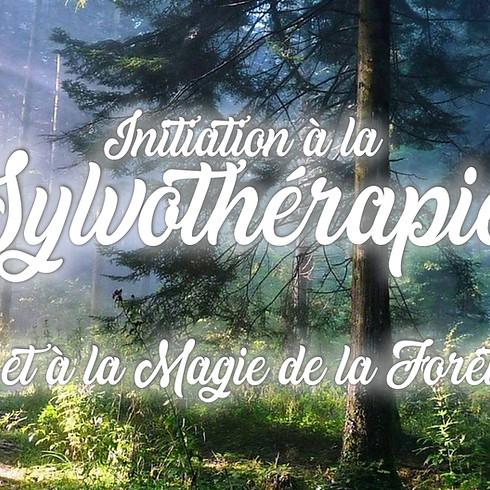 Sylvothérapie & la Magie de la Forêt (Mormal/Nord)