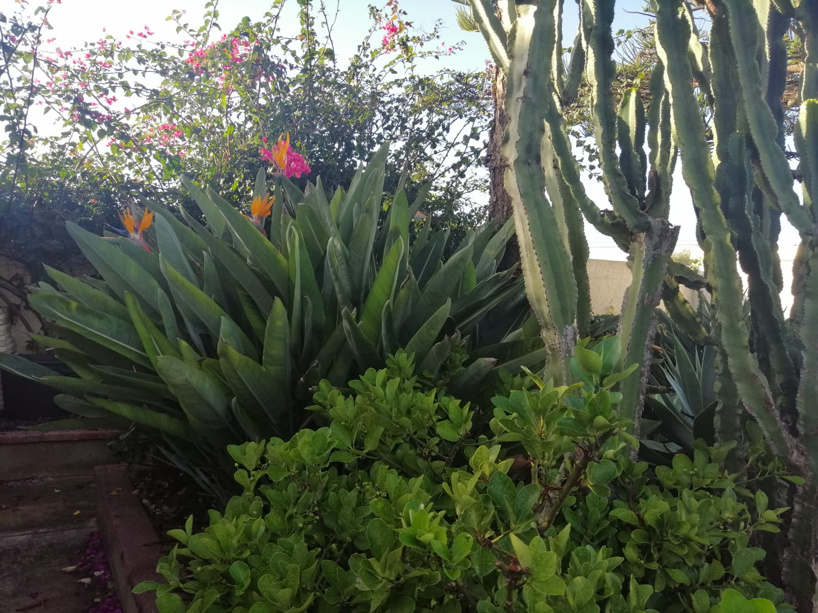 een stukje tropische tuin