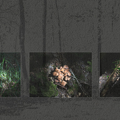 THE FOREST FLOOR ( 2020 )