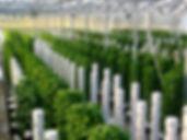 tower farm.jpg