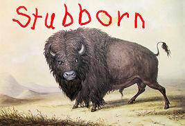 Stubborn Buffalo