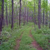 Mountain Land for sale in Alexander County