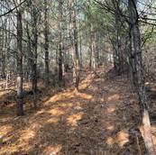 Wooded with Trails
