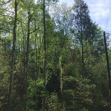 Mountain Land Near Boone NC