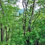 Land near Blue Ridge Parkway