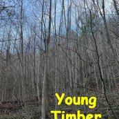 Young Timber