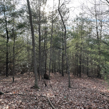 Wooded land in Wilkes County