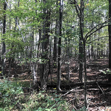 Private Hunting Land in Wilkes County