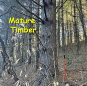 Testerman-Turnmire17-20.jpg