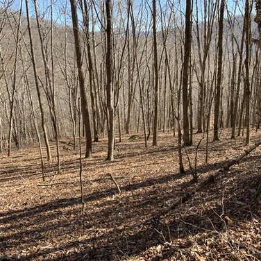 Heavily Wooded Land in Avery County NC