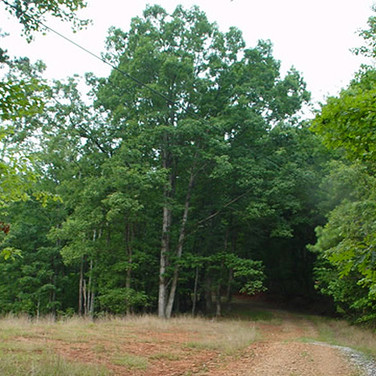 Alexander County undeveloped land