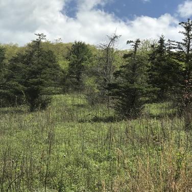 Ashe County Mountain Land